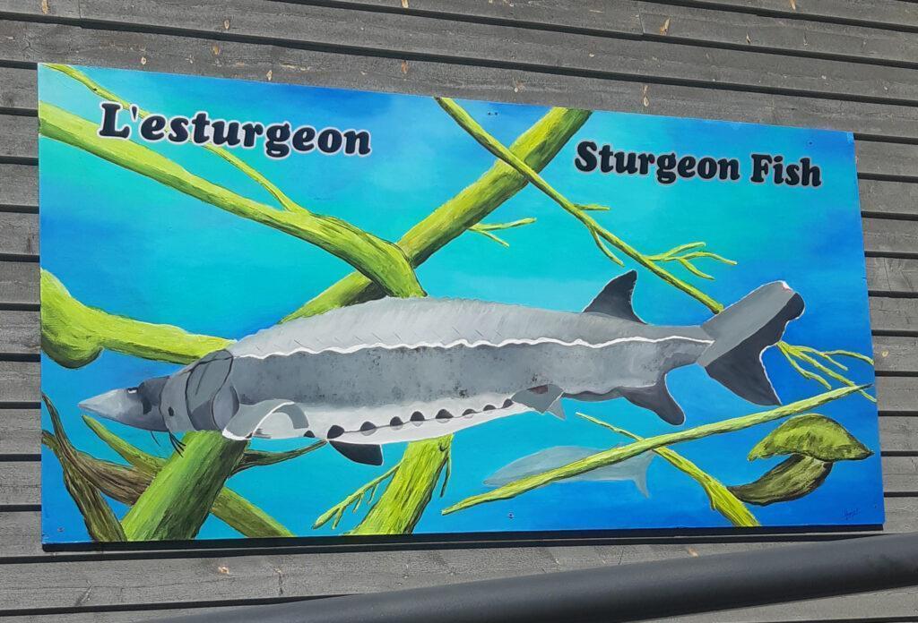 Local Mural: The Sturgeon